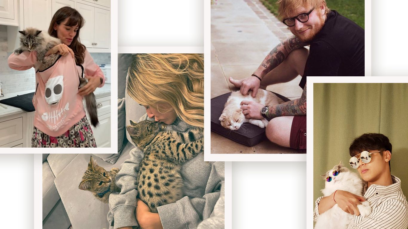 Nama Kucing yang Bagus Terinspirasi dari Peliharaan Para Selebriti