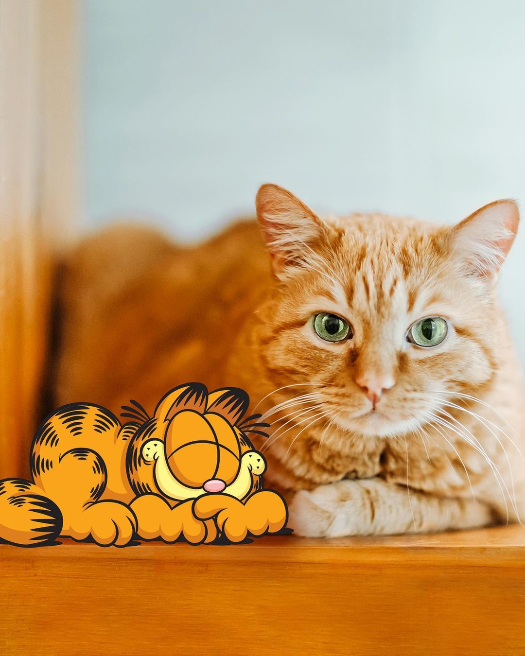 Courtesy of Garfield