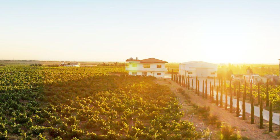 6 Tempat Pembuatan Anggur Terunik di Dunia