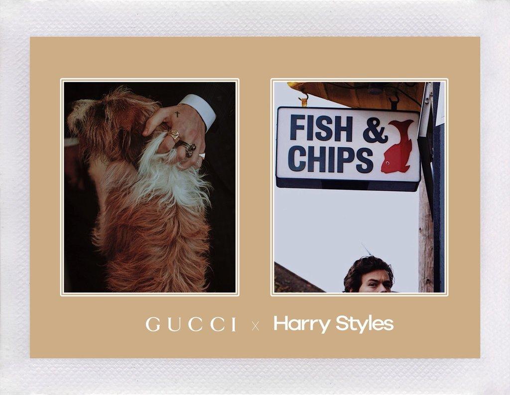 Harry Styles Bintangi Kampanye Terbaru Gucci