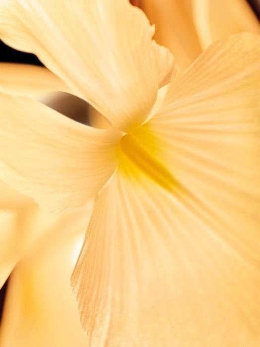 Bulgari Merilis Tiga Parfum Terbaru Beraroma Floral