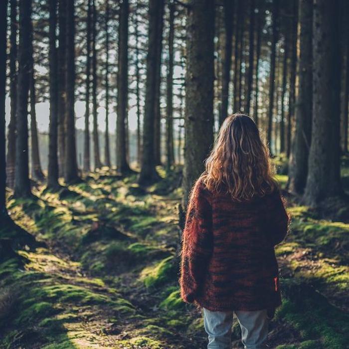 Tren Mandi Hutan: Manfaat bagi Kesehatan & Cara Melakukannya