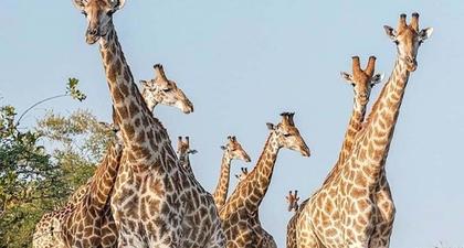 Melihat Afrika Selatan Sebagai Tujuan Baru untuk Liburan