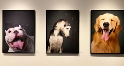 Edwin's Gallery Menggelar Pameran Fotografi High Dogciety