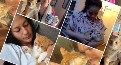 """""""Kucing Oren"""" yang Fenomenal dan Beberapa Selebriti yang Memeliharanya"""
